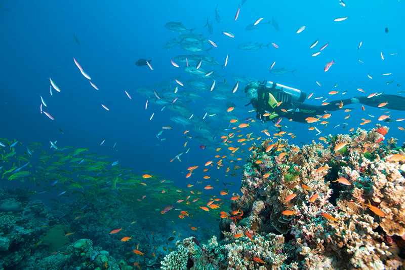 Tusa dive great barrier reef diving - Dive great barrier reef ...