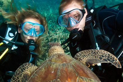 Diving with Turtles, Cairns Reef Day Trip