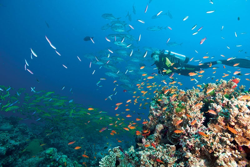 Certified diving on the great barrier reef - Dive great barrier reef ...