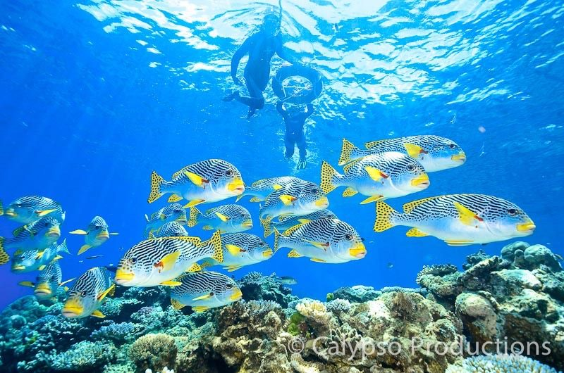 cairns great barrier reef snorkelling trips with tusa