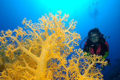 4 Day / 4 Night – Coral Sea & Ribbons Reef Adventure