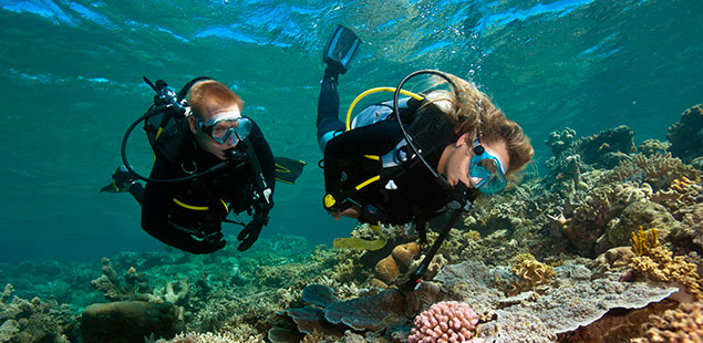 Cairns great barrier reef scuba diving and snorkeling reef - Best place to dive the great barrier reef ...
