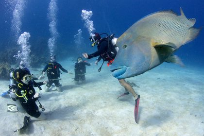 PADI Open Water Referral Courses